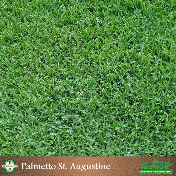 Image Result For St Augustine Sod Care